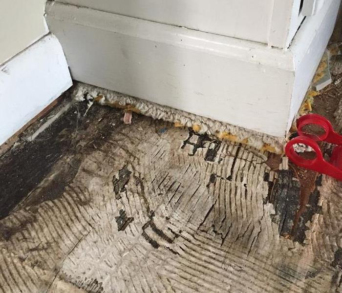 Mold Damage Found in Virginia Beach, VA Home